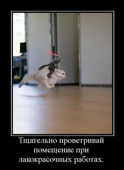 прикольные фото кошек с надписями, демотиваторы
