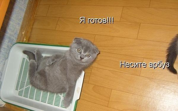 смотреть фото смешных котят