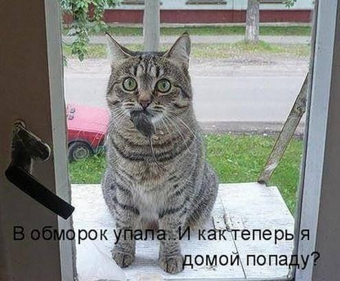 прикольные фото котов с надписями