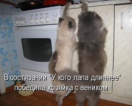 мешные фото животных, демонтиваторы