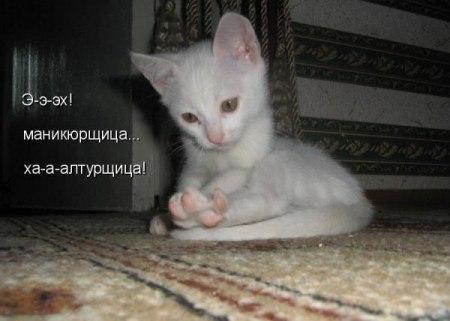прикольные фото котят +с надписями