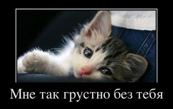 фото котят с надписями