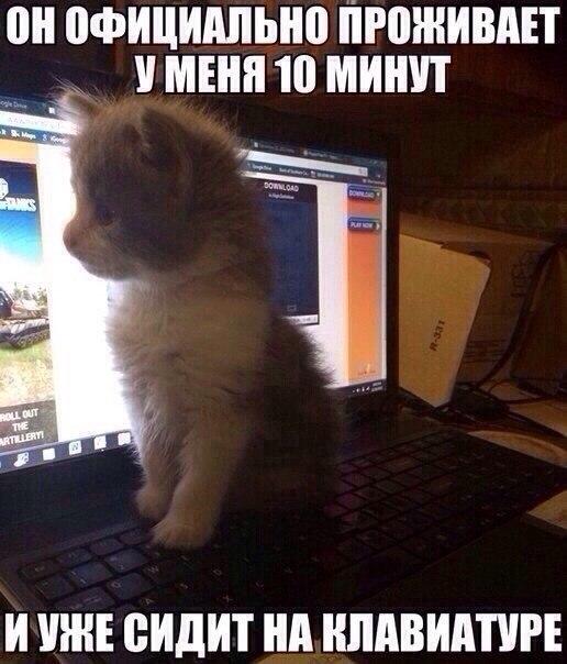 маленькие пушистые котята фото