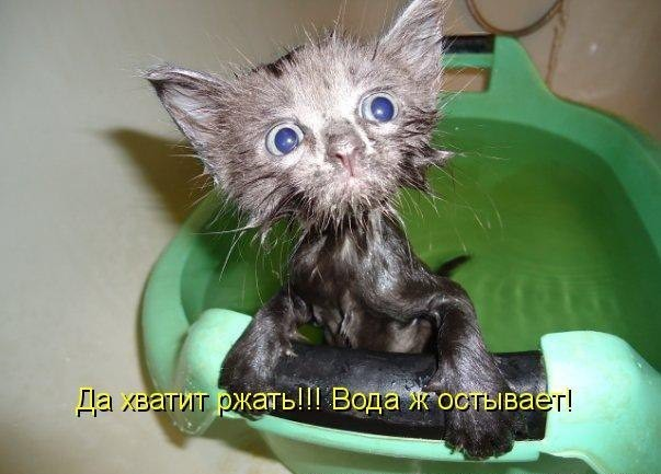 фото самых смешных котят