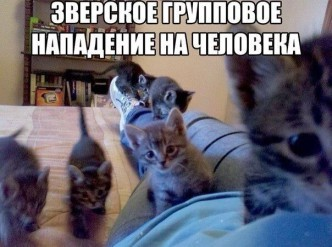 смешные фото животных, демонтиваторы