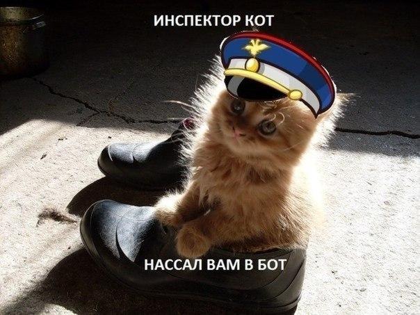 смешной рыжий котенок