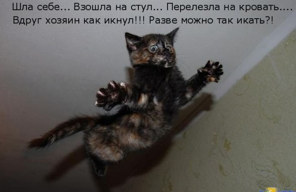 фото с котами и смешными надписями