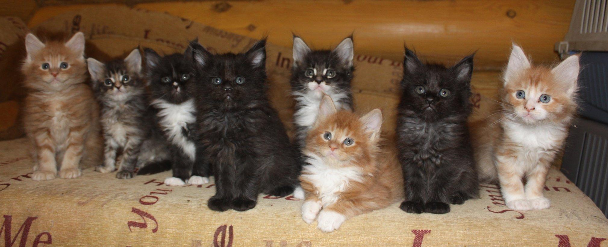 прикольное фото котят