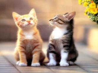 красивое фото котят