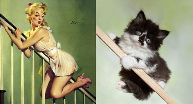 прикольные фото котят и девушек
