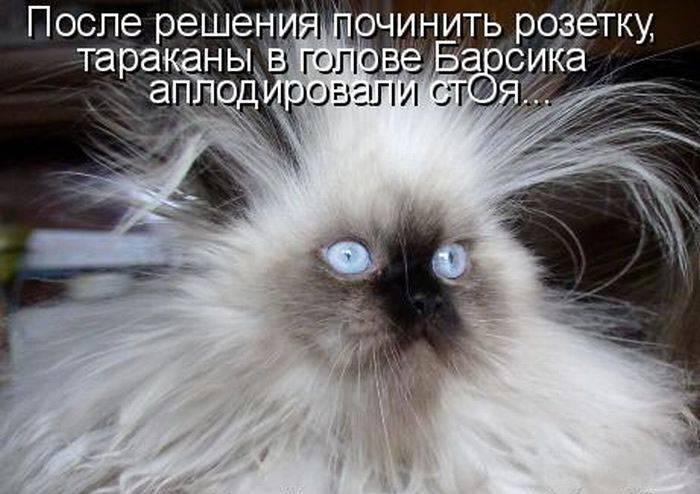 прикольный пушистый кот