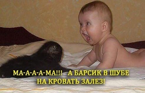 смешные фото котят и детей