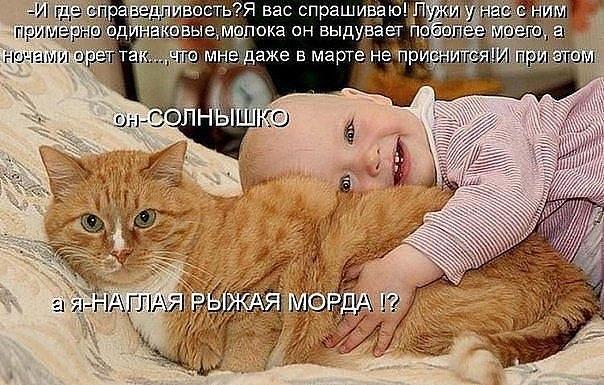 прикольные фото кошек и детей
