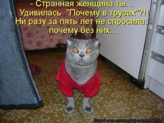 забавные фото кошек, демотиваторы