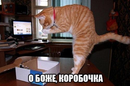 рыжий кот смешное фото