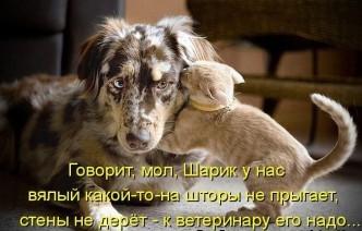прикольные фото собак и котов