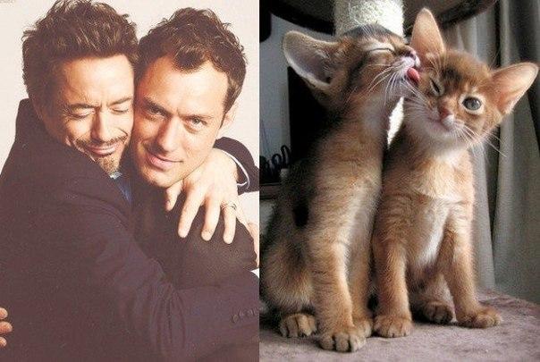 забавные фото котов и мужчин