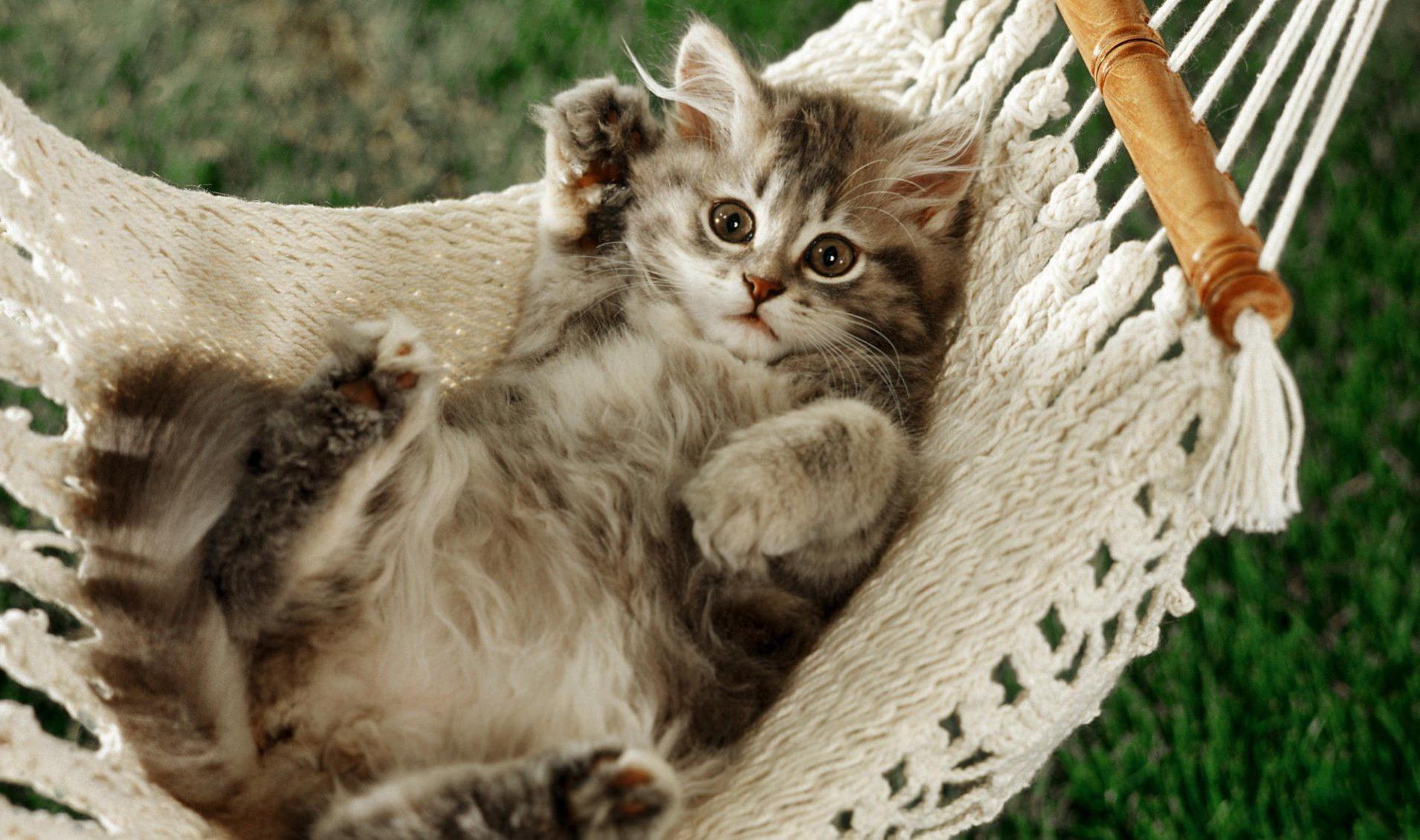 фото пушистых котят