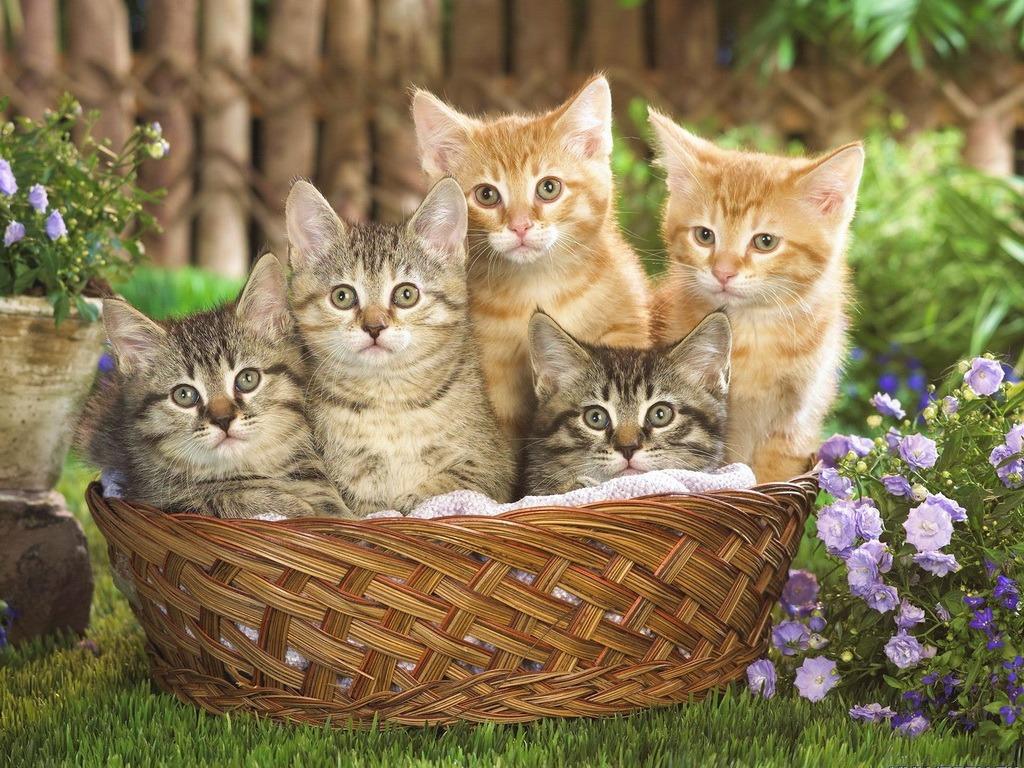 фото красивых котят