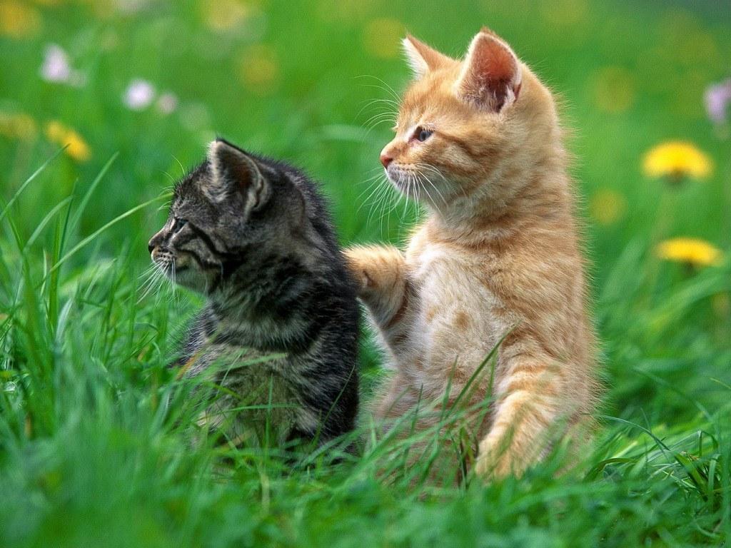 самые милые котята фото