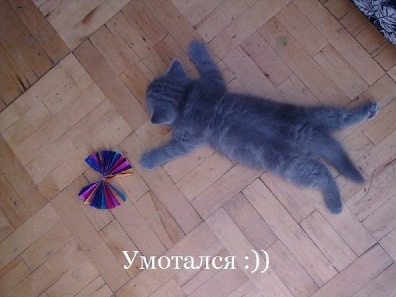 прикольные фото котят