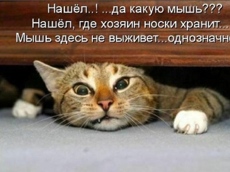 прикольный рыжий кот фото