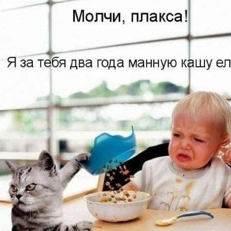 забавные фото котов и детей