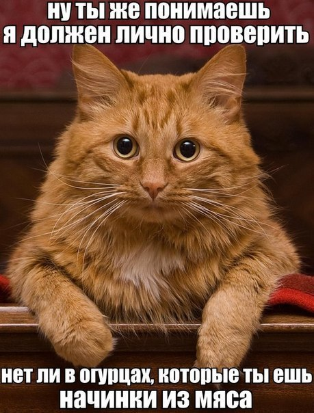 смешной рыжий кот фото