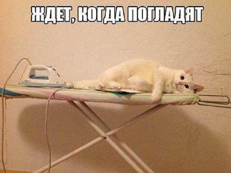 забавный рыжий котенок