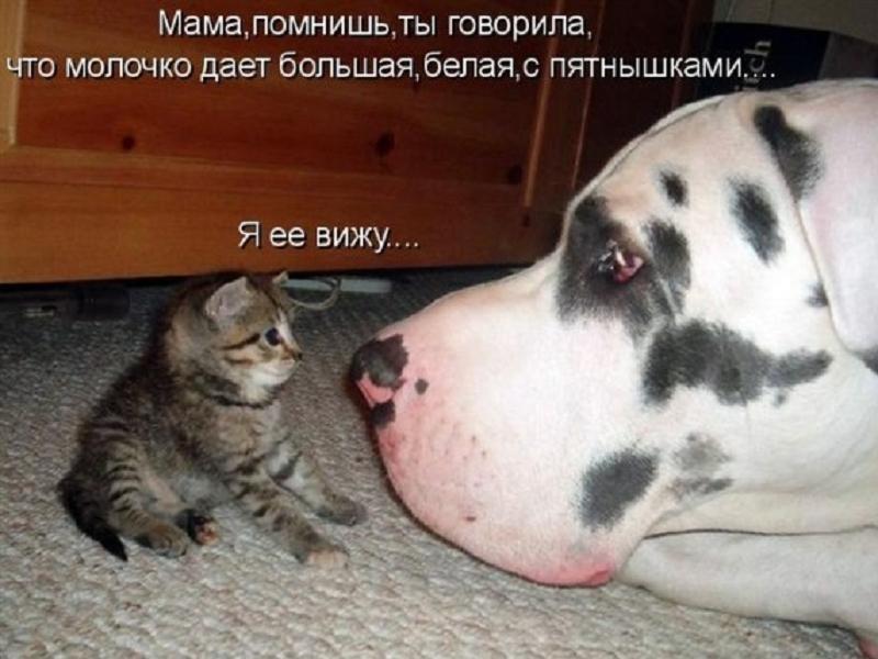 забавные фото котят и собак