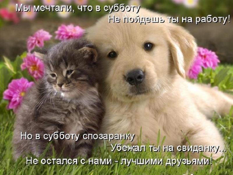 забавные фото котят и щенков