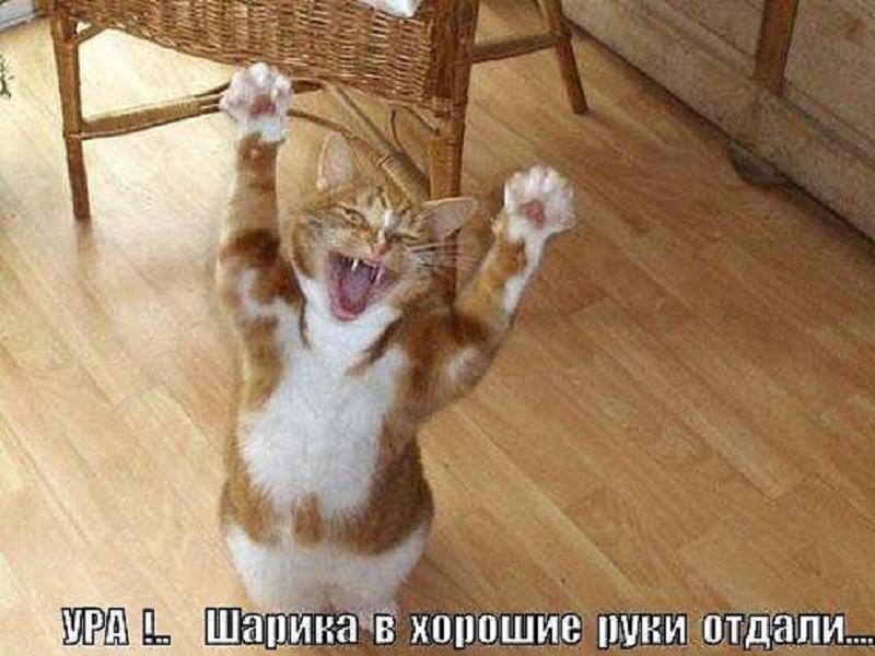 http://lisimnik.ru/wp-content/uploads/2014/06/gBHimqS7KMg.jpg_resize.jpg