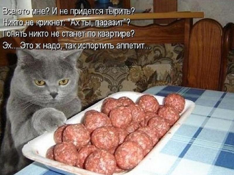 забавные фото кошек и котов
