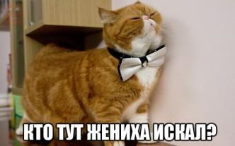 забавный рыжий кот фото