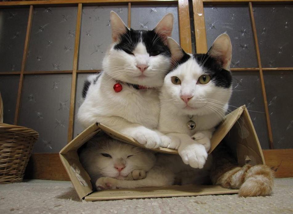 коты любят коробки