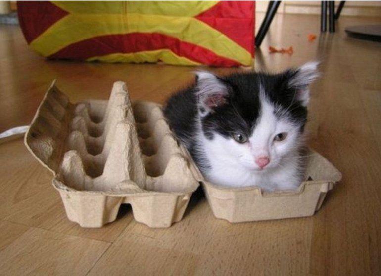 котята любят коробки