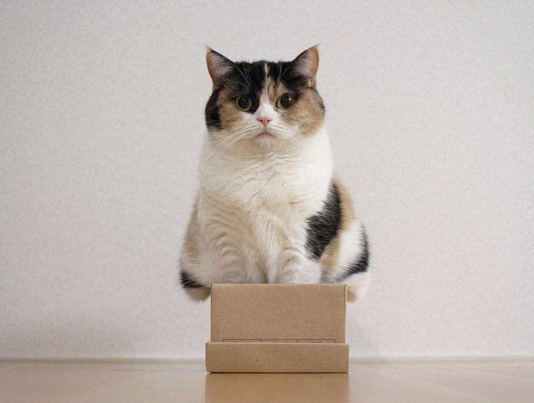 большой кот в маленькой коробке