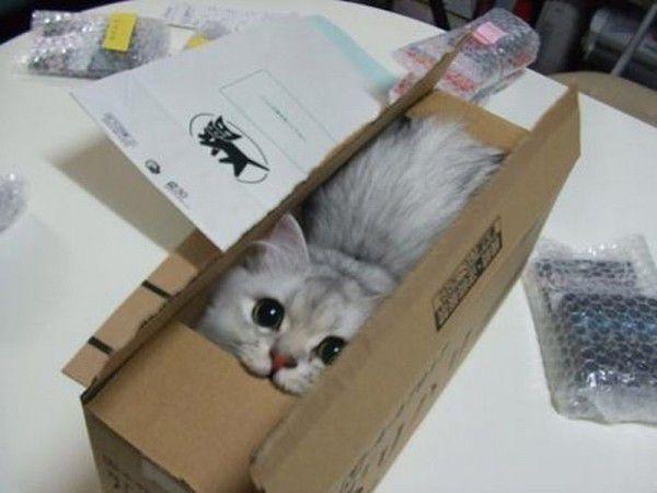 коробка домик для кошки