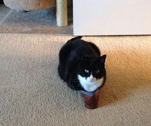 коты и кошки любят коробки