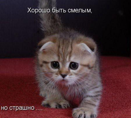 Фото смешных котят