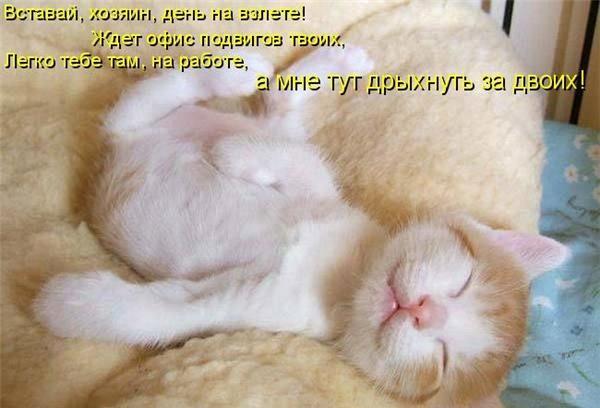 маленькие котята прикольные фото