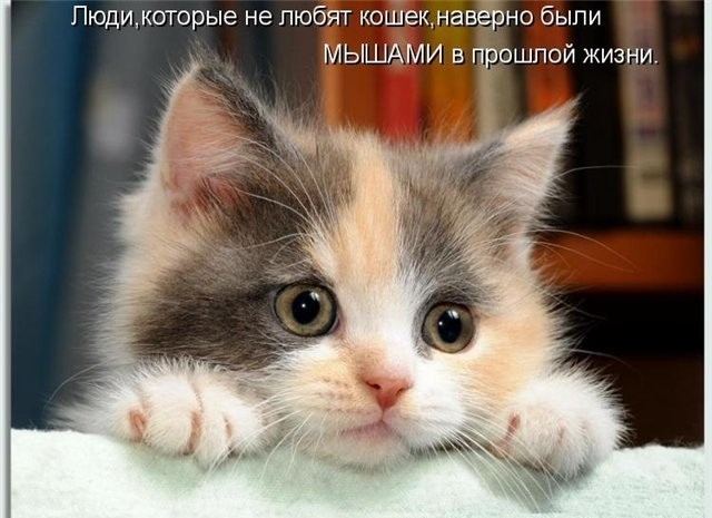 красивые маленькие котята фото