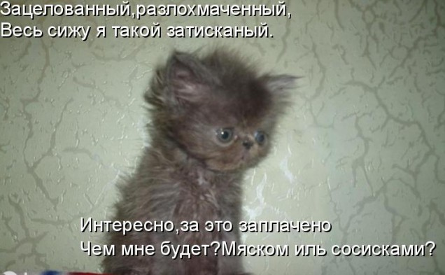 забавные котята фото