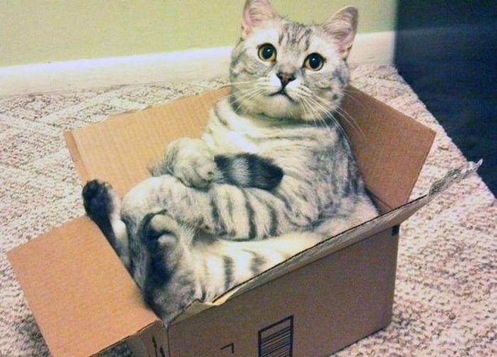 кошка в коробке фото