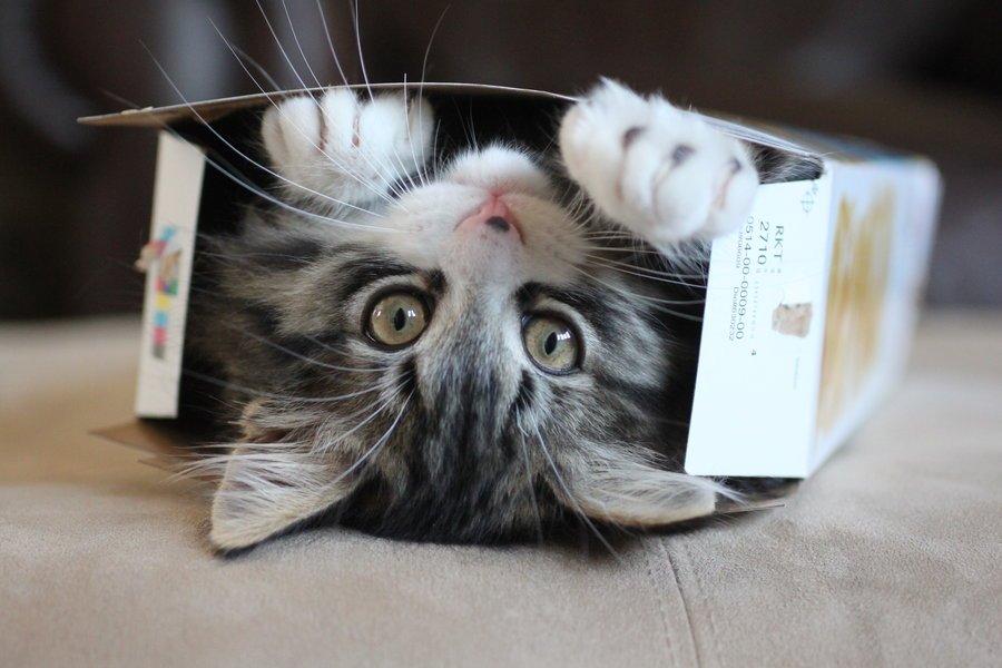 коробка для котят