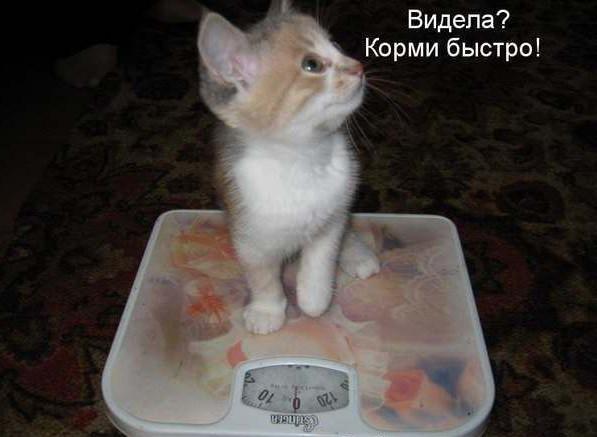 маленькие котята фото