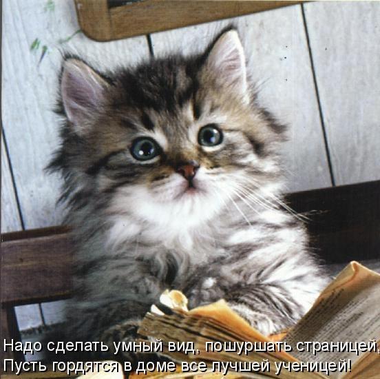красивые фото котят