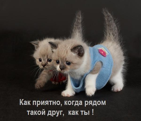 прикольные фото маленьких котят