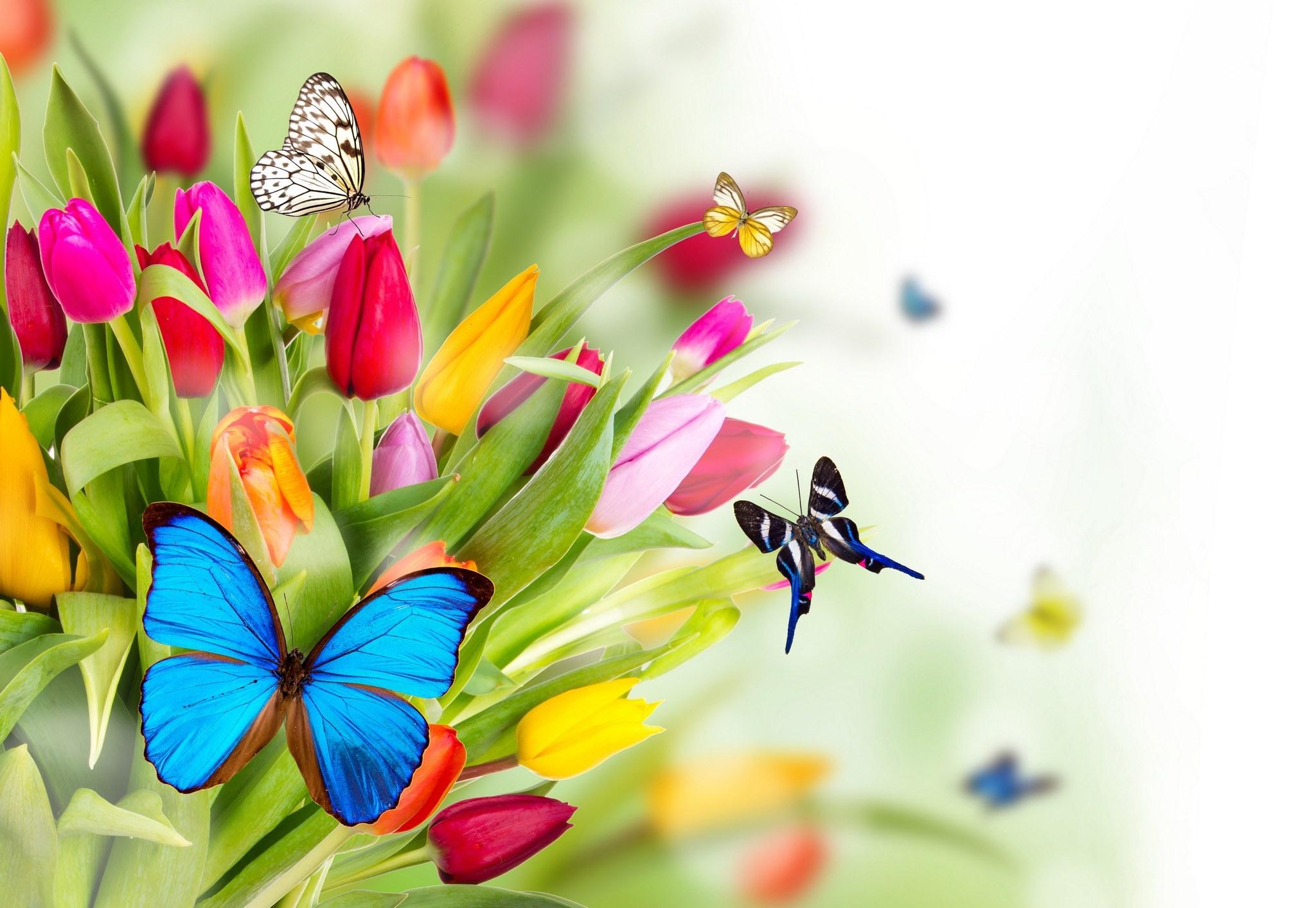 красивые цветы женщине