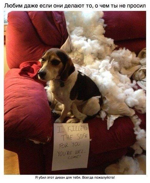 собаки фото смешные